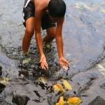 Boy chasing fish at the Puuhonua o Honaunau hukilau