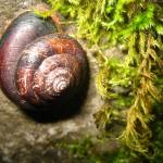 snail on mossy rock