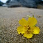 flower on beach