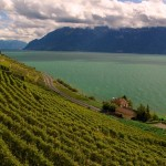 vineyards overlooking Lake Geneva