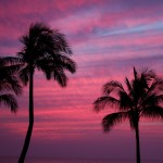 palm trees and sunset in Ko Olina