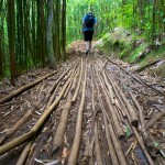 hiking trail in the Manoa Valley