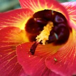 flower in Manoa Valley