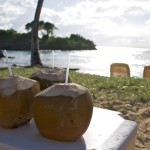 tropical drinks in coconuts on beach