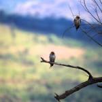 Birds at Pilanesberg National Park