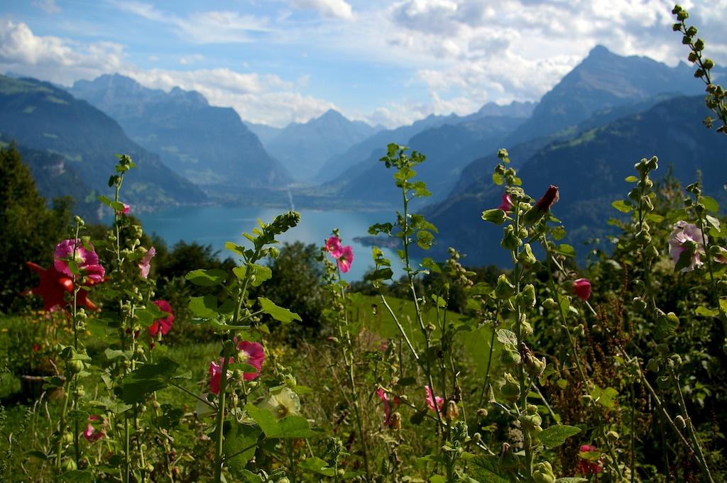 Lake Luzern view