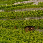 hut in Lavaux vineyards
