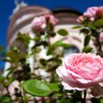 melk abbey pink rose garden austria