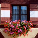 Bavarian window with flowers