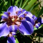 Jardim Botanico flower