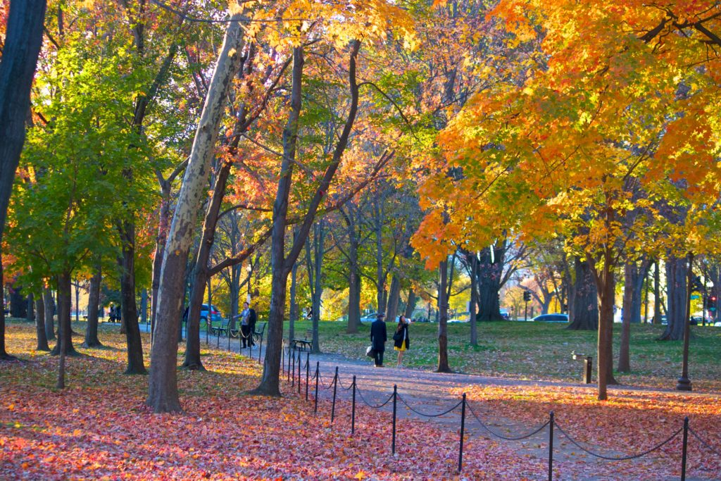 Urban Escapes: Best Places to See Fall Foliage without a Car