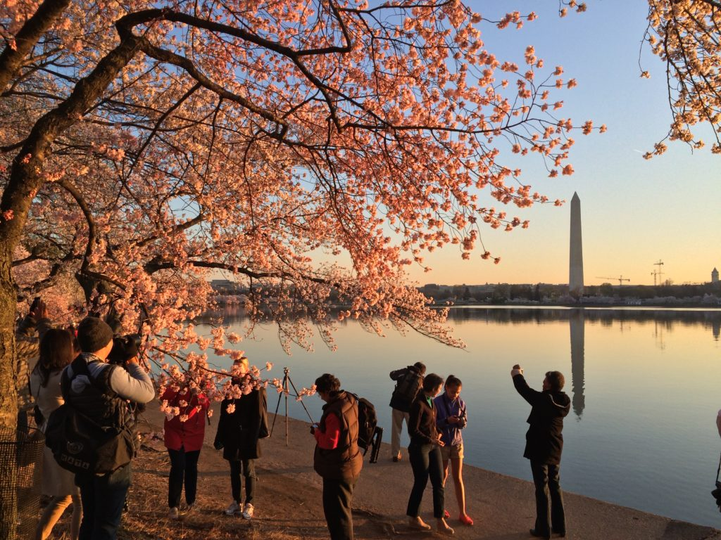 Cherry Blossom Festival: 5 Easy iPhone Photography Tips