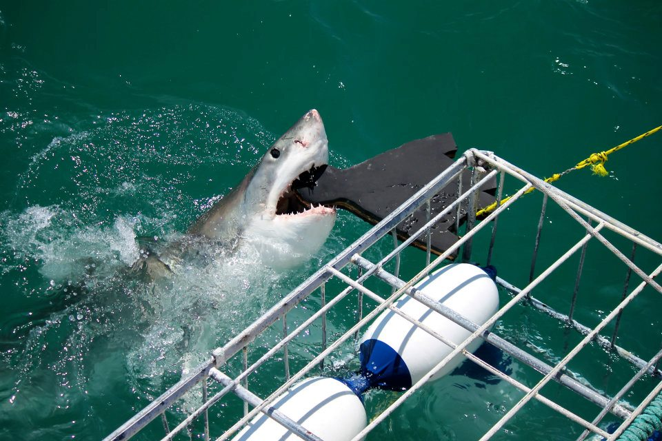 Will You Really See Sharks Where 'Sharknado,' 'Shark Week' and 'Jaws' Were Filmed?